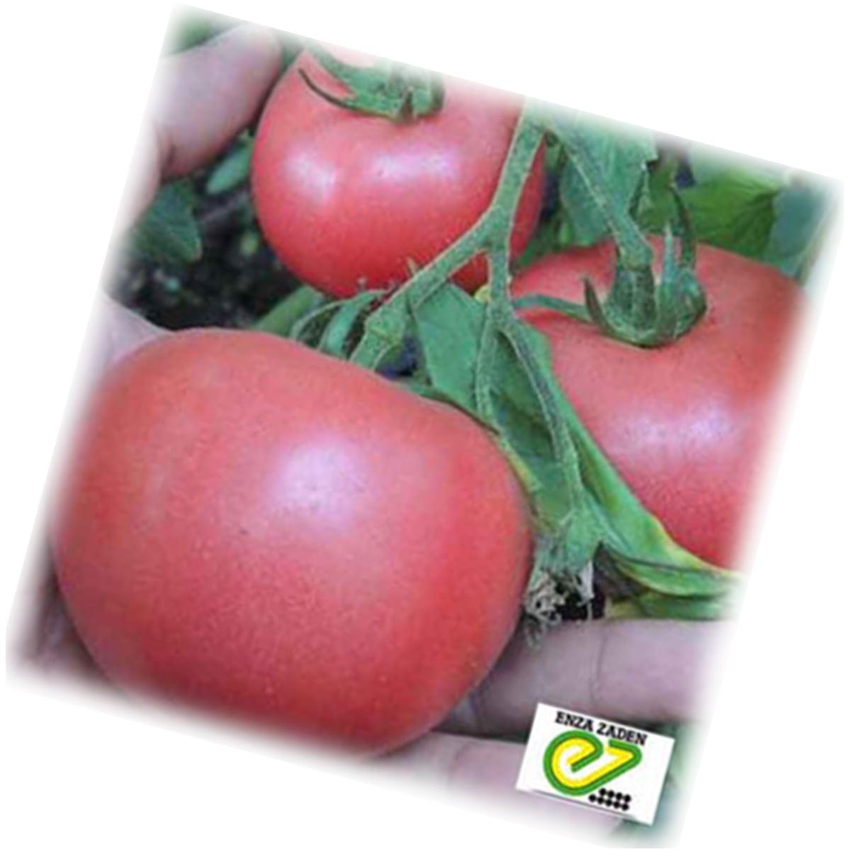 чтобы семена томатов быстрее прорастали