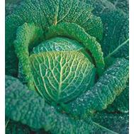 Вироса F1 - капуста савойская, 2 500 семян (прецизионные), Bejo/Бейо (Голландия), фото 1