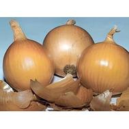 Банко - лук репчатый, 250 000 семян, Syngenta (Сингента), Голландия, фото 1