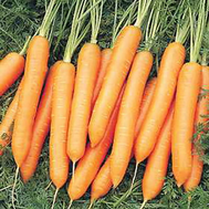 Белградо F1 - семена моркови, 1 000 000 семян (прецизионные, фр. от 1,6 до 2,6 мм), Bejo/Бейо (Голландия), фото 1
