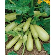 Кавили F1 - семена кабачка, 500 и 1 000 семян, Nunhems/Нунемс (Голландия), фото 1