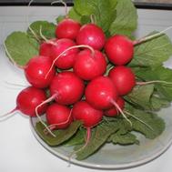 Ролекс F1 – семена редиса , 50 000 семян, (прецизионные, фр. от 2,25 до 3,25 мм), Bejo/Бейо (Голландия), фото 1
