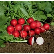 Ровер F1 - семена редиса, 50 000 семян (прецизионные, фр. от 2,25 до 3,50 мм), Bejo/Бейо (Голландия), фото 1