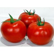Волверин F1 - томат детерминантный, 1 000 семян, Syngenta (Сингента), Голландия, фото 1