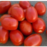 Адванс F1 - томат для переработки, 1 000, 5 000 и 25 000 семян, Nunhems/Нунемс (Голландия), фото 1