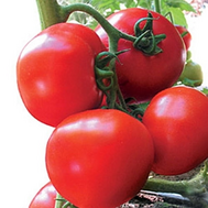 Эсмира F1 - семена томатов, 100 и 1 000 семян, Rijk Zwaan/Райк Цваан (Голландия), фото 1
