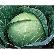 Етма F1 -  капуста белокочанная, 1 000, 2 500 и 10 000 семян, Rijk Zwaan/Райк Цваан (Голландия), фото 1