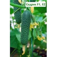 Седрик F1 - семена огурцов корнишонов, 50 и 500 семян,  Enza Zaden/Энза Заден (Голландия), фото 1