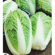 Маноко F1 - капуста пекинская, 2 500 и 10 000 семян (прецизионные), Bejo/Бейо (Голландия), фото 1
