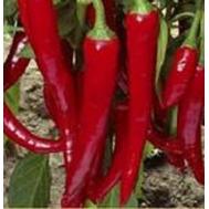 Шакира F1 -  семена перца острого, 500 семян, Enza Zaden/Энза Заден (Голландия), фото 1