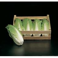 Таранко F1 - капуста пекинская, 2 500 семян (прецизионные), Bejo/Бейо (Голландия), фото 1