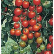 """""""ФАВОРИТА F1"""" - семена томатов, 500 и 1 000 с, De Ruiter (Де ройтер) Голландия, фото 1"""