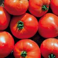 Усмань F1  - семена томатов, 1 000 семян, Enza Zaden/Энза Заден (Голландия), фото 1