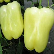 Мадонна F1 - семена перца сладкого, 1 000 семян, Clause/Клаус (Франция), фото 1