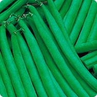 Ксера - фасоль, 100 000 семян, Seminis (Семинис) Голландия, фото 1
