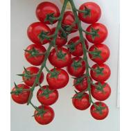 Хуанита F1 - томат индентерминантный, 1 000 семян, De Ruiter (Де ройтер) Голландия, фото 1