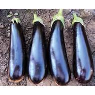 Анамур F1 -  семена баклажана, 100, 500 и 1 000 семян, Rijk Zwaan/Райк Цваан (Голландия), фото 1