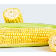 Ноа F1 - кукуруза сахарная, 5 000 и 100 000 семян, Pop Vriend (Голландия), фото 1