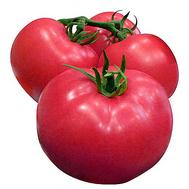 Алези F1 - томат индетерминантный, 250 и 1 000 семян, Vilmorin/Вилморин (Франция), фото 1