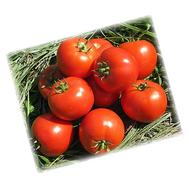 Бехрам F1 - семена томатов, 1 000 семян, Enza Zaden/Энза Заден (Голландия), фото 1