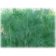 Гренадер - семена укропа, Гавриш/Gavrish (Россия), фото 1