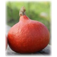 Керлинг - семена тыквы, Гавриш/Gavrish (Россия), фото 1
