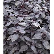 Базилик фиолетовый, 50 гр, Prof Seeds, фото 1