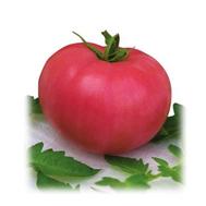 Боярин F1 - семена томатов, Поиск (Россия), фото 1