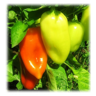 """""""Белозерка F1"""" - семена перца сладкого, 50 гр и 500 гр, фото 1"""