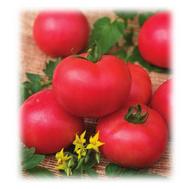 Персиановский F1 - семена томатов, Поиск (Россия), фото 1