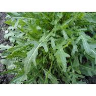 Руккола дикая, 50 гр., Prof Seeds, фото 1
