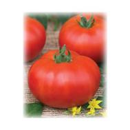 Волгоградский 5/95 - семена томатов, 50 и 500 гр.(банка), Поиск (Россия), фото 1