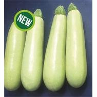 СВ 8575 ЯЛ F1 - семена кабачка, 500 и 1 000 семян, Seminis/Семинис (Голландия), фото 1