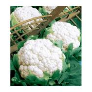 Фридом F1 - семена капусты цветной, 1 000 и 2 500 семян, Seminis/Семинис (Голландия), фото 1