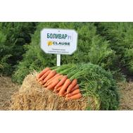 Боливар F1 - семена моркови, 100 000 и 500 000 семян, 250 000 драже, Clause/Клаус (Франция), фото 1