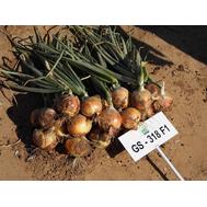 GS-318 F1 - семена лука репчатого, 250 000 семян, Holland Seeds, (Голландия), фото 1