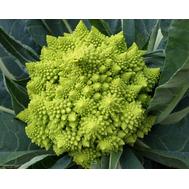 Селио F1 - семена капусты цветной, 2 500 семян, Clause/Клаус (Франция), фото 1
