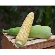 Камберлэнд F1 - кукуруза сахарная, 5 000 семян, Clause/Клаус (Франция), фото 1