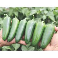 Эверман F1 - семена перца горького, 250 семян, Clause/Клаус (Франция), фото 1