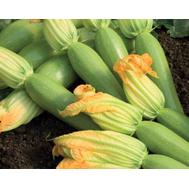 Невира F1 - семена кабачка, 1 000 семян, Vilmorin/Вилморин (Франция), фото 1