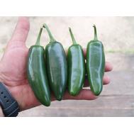 Микстеко F1 - семена перца горького, 250 семян, Clause/Клаус (Франция), фото 1