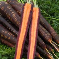 Пёрпл Хейз F1 - семена моркови (фиолетовая), 1 000 000 семян (прецизионные, фр. от 1,6 до 2,2 мм), Bejo/Бейо (Голландия), фото 1