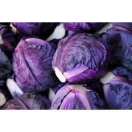 Ремала F1 - капуста краснокочанная, 2 500 семян, Syngenta/Сингента (Голландия), фото 1