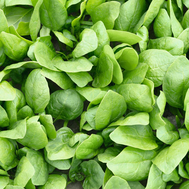 Рембрандт F1 - семена шпината, 50 000 семян (калиброванные), Bejo/Бейо (Голландия), фото 1