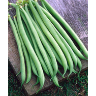 Серенгети - фасоль, 100 000 семян, Syngenta/Сингента (Голландия), фото 1