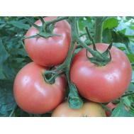 Пинк Спарк F1 - семена томатов, 500 семян, Sakata seeds/Саката сидз (Япония), фото 1