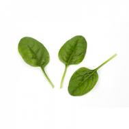 Зебу F1 -  семена шпината, Rijk Zwaan/Райк Цваан (Голландия), фото 1