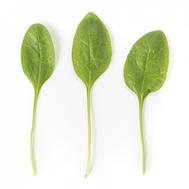 Меркат F1 -  семена шпината, Rijk Zwaan/Райк Цваан (Голландия), фото 1