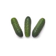 Соната РЗ F1 - семена корнишонов, Rijk Zwaan/Райк Цваан (Голландия), фото 1