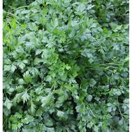 Арлекино - семена петрушки, 20 и 100 гр., Гавриш/Gavrish (Россия), фото 1